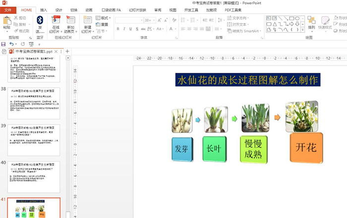 如何用ppt制作水仙花的成长过程